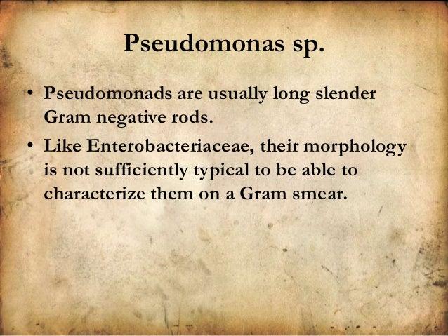sputum dictionary