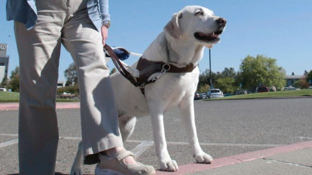 refusing guide dogs